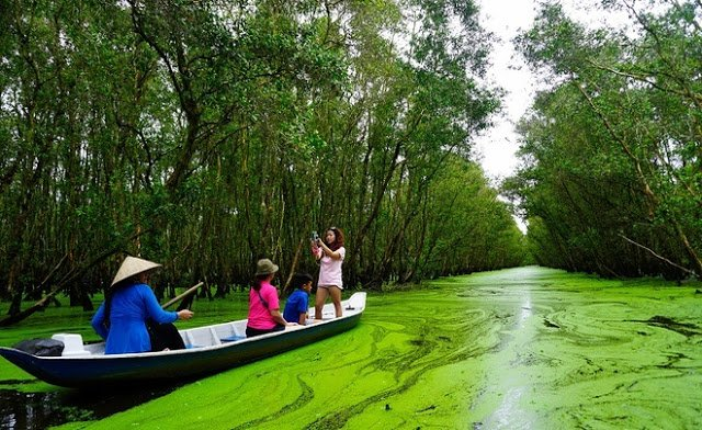 Take a Boat Ride Through the Beauty of Tra Su Cajuput Forest